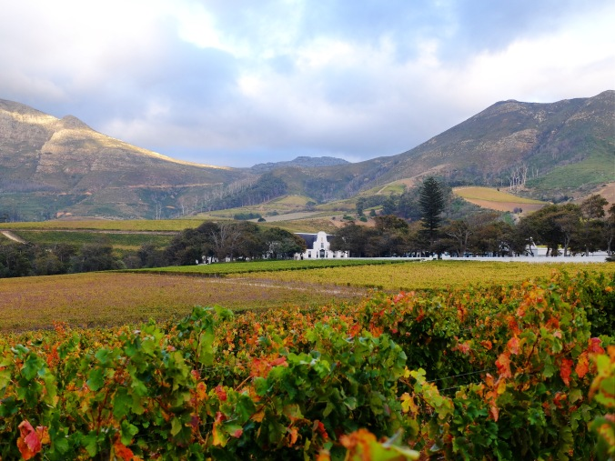 Groot Constantia Vineyards