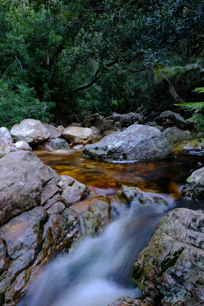 Beautiful scenes along the Eerste Rivier at Jonkershoek Nature Rerserve