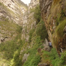 Looking up towards Ferny Gully