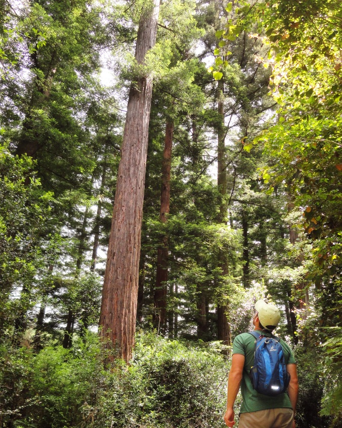 The experiment plot of Redwood Trees along the Bushbuck Trail