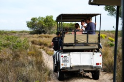Game Drive at Thali Thali