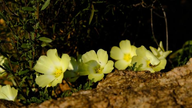 Namaqua National Park - Wildflowers - Justin Hawthorne 01