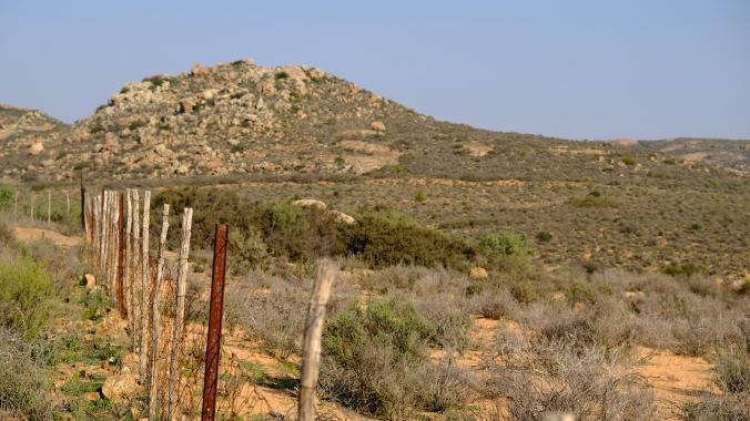 Namaqua National Park - Wildflowers - Justin Hawthorne 02