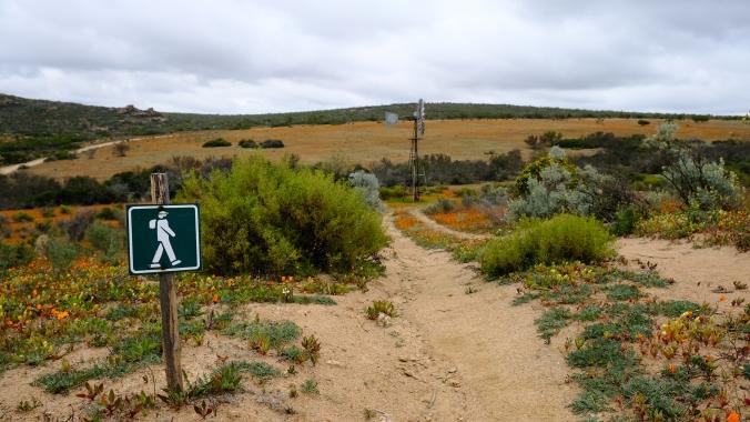 Namaqua National Park - Wildflowers - Justin Hawthorne 17