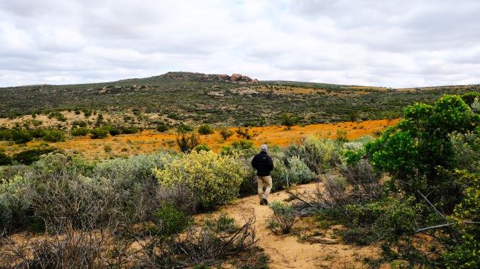 Namaqua National Park - Wildflowers - Justin Hawthorne 45