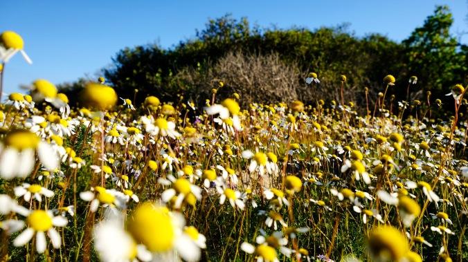 Rocherpan Nature Reserve - Winter Weekend - Justin Hawthorne 04