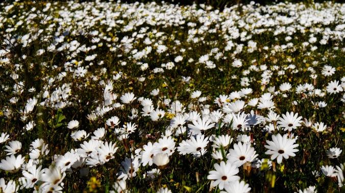 Rocherpan Nature Reserve - Winter Weekend - Justin Hawthorne 25