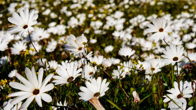 Rocherpan Nature Reserve - Winter Weekend - Justin Hawthorne 26