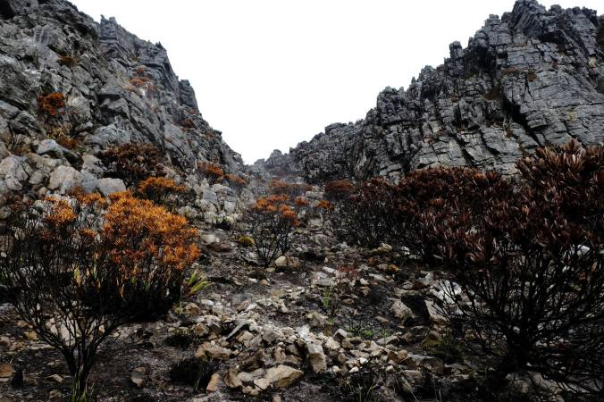 #12ApostlesFire - Justin Hawthorne - Table Mountain - 1 Month Update 15