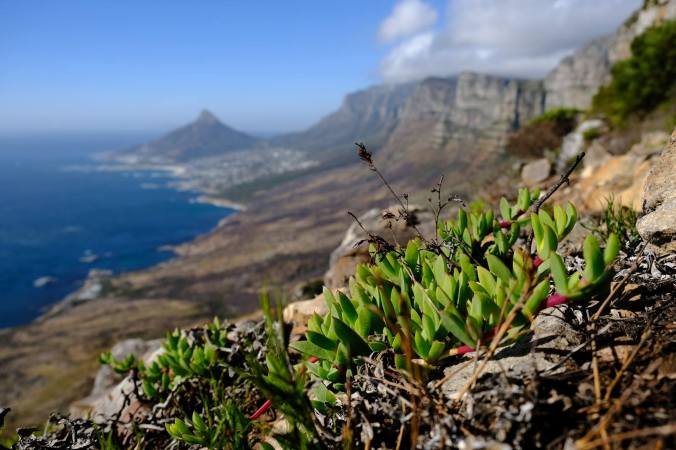 #12ApostlesFire - Justin Hawthorne - Table Mountain - 5 Month Update 04