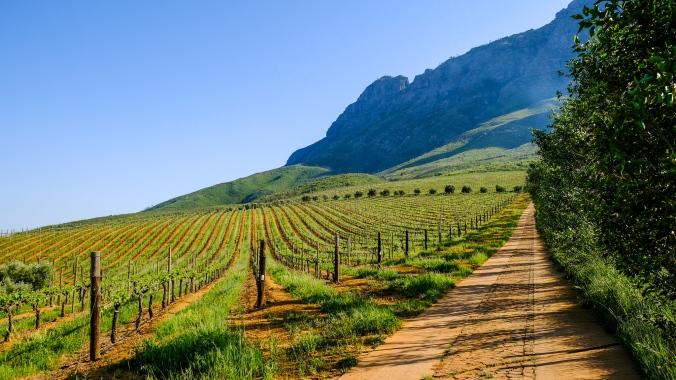 Simonsberg Hike - Stellenbosch - Justin Hawthorne 1