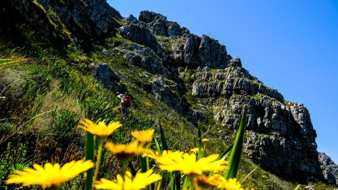 Simonsberg Hike - Stellenbosch - Justin Hawthorne 23