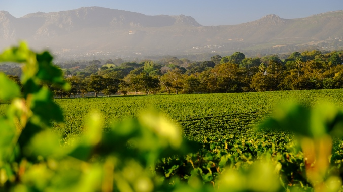 Groot Constantia Harvest Late Summer - Smoke over Valley