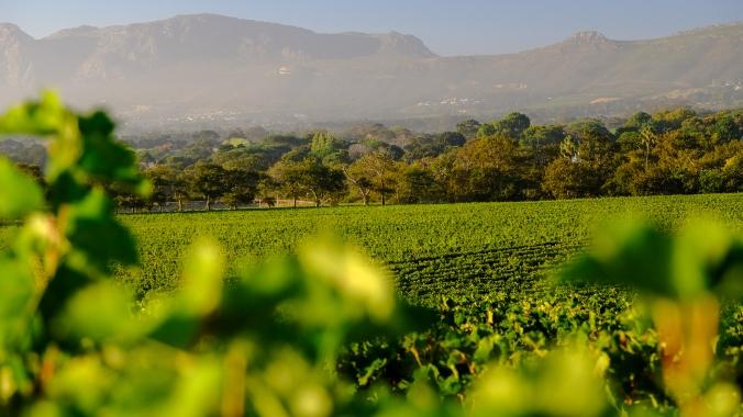 Groot Constantia Harvest Late Summer - Smoke over Valley