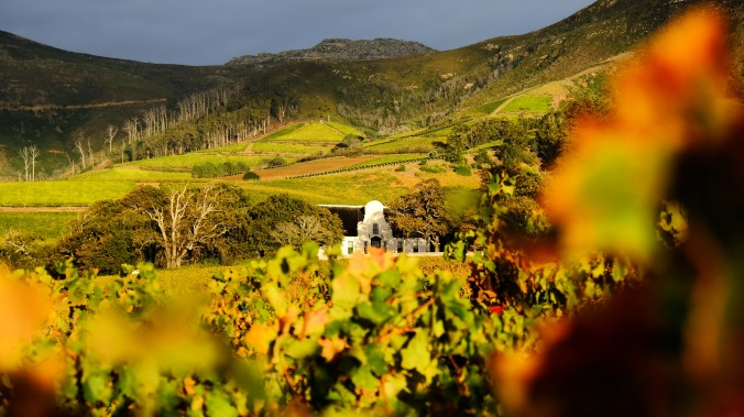 Groot Constantia - J Hawthorne - Vineyard Photography - Manor House Autumn