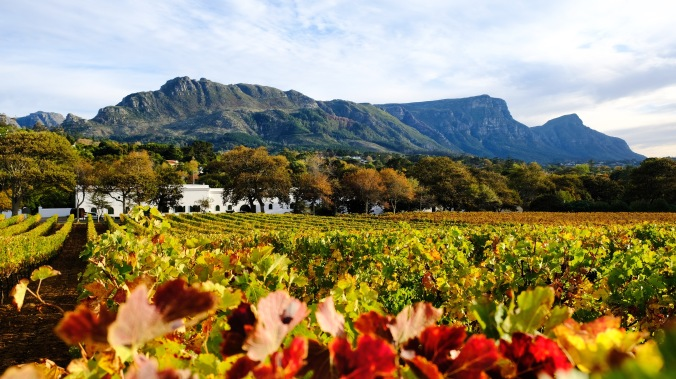Groot Constantia - J Hawthorne - Vineyard Photography - Table Mountain