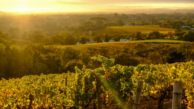 Justin_Hawthorne - Vineyard_Photography - Cape_Winelands - Groot Constantia Sunrise