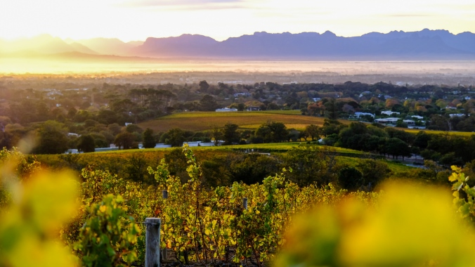 Vineyard Photography - Justin Hawthorne - Autumn Sunrise in Constantia
