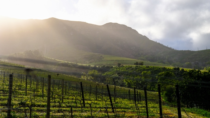 Vineyard Photography - Justin Hawthorne Late Afternoon sun
