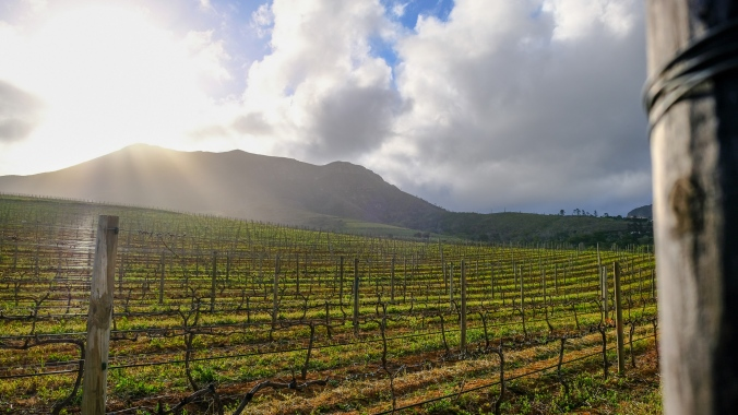 Vineyard Photography - Justin Hawthorne - LAte Afternoon sunlight