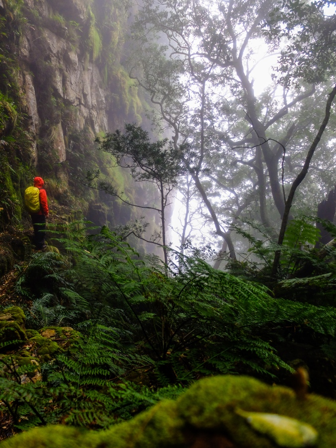 Justin Hawthorne Hiking Table Mountain Indigenous Afromontane Forest in the rain