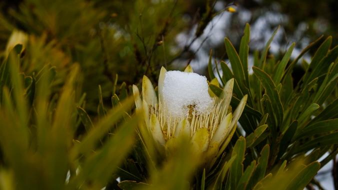 Snow_Hiking_Western_Cape_Franschhoek_Justin_Hawthorne_05